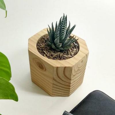 hastha-pot-kayu