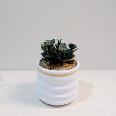 bushes-succulent-kaktus-kertas