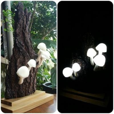 lampu-jamur