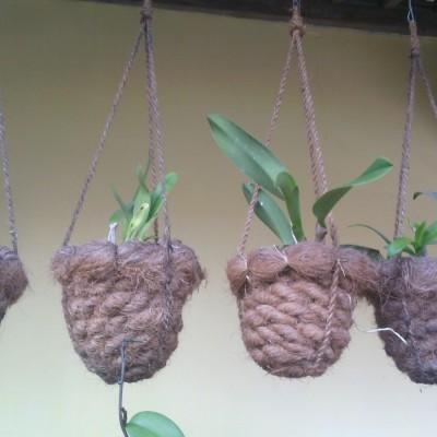 pot-angrek-dari-sabut-kelapa