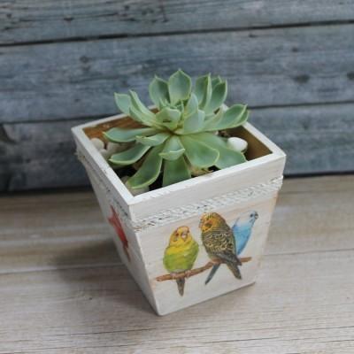 pot-kaktus