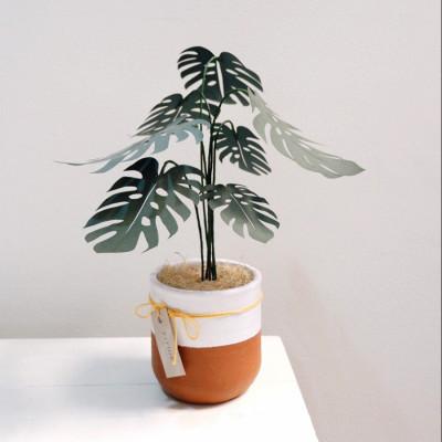paper-monstera-plant-monstera-kertas